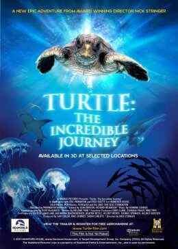 海龟神奇之旅在线观看